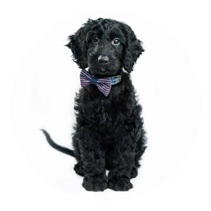 Pet Photographer Example Photo
